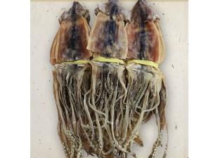 배오징어 1.7kg(10미)