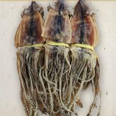 배오징어 2kg(20미)